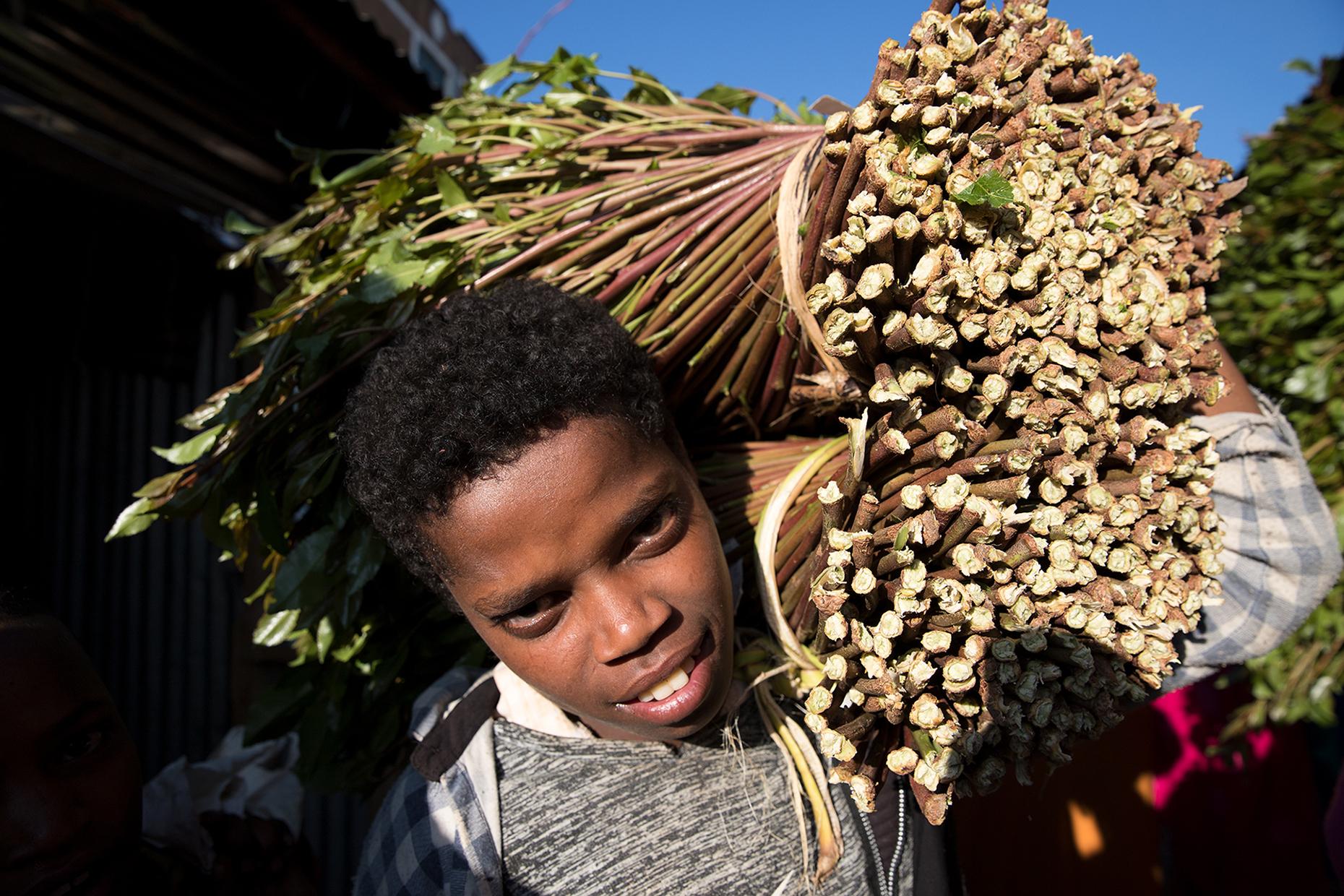 khat ethiopia harar market Awaday